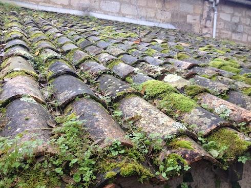 Lichen sur toiture